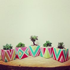 favors. love the containers, but I'm thinking a mix of cacti and succulents.