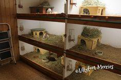 Lillyfoot Meerschweinchen Stallanlage