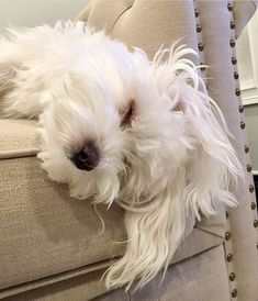 Maltese and Children: Is It a Good Combination - Champion Dogs Cute Puppies, Cute Dogs, Dogs And Puppies, Doggies, Maltese Dogs, Teacup Maltese, Dog Rules, Dog Coats, Little Dogs