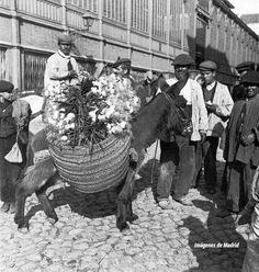 Mercado de la Cebada 1906 Alois Beer