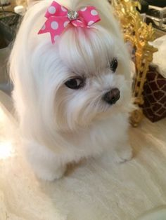 Her look tho! Pet Accessories, Dog Toys, Cat Toys, Pet Tricks