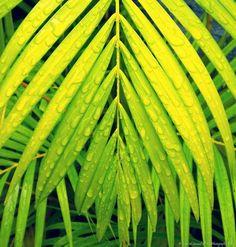 Neon leaves