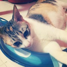 """""""my fat cat is so lazy, she plays lying down.. zzz"""" submitted by @hyukco via twitter."""