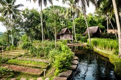 Bambu Indah Resort In Bali, Indonesia – An Unforgettable Experience For Nature Lovers Landscaping With Rocks, Modern Landscaping, Pool Landscaping, Tropical Houses, Tropical Paradise, Ubud, Bali Resort, Thai House, Bamboo House