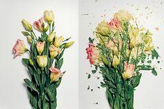 "Jon Shireman's ""Broken Flowers"""