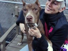 SAFE --- Manhattan Center  KING AKA SID - A1020285 *** AVERAGE HOME ***  MALE, BROWN / WHITE, PIT BULL MIX, 6 mos STRAY - STRAY WAIT, NO HOLD Reason STRAY  Intake condition UNSPECIFIE Intake Date 11/10/2014, From NY 10034, DueOut Date 11/13/2014 https://www.facebook.com/photo.php?fbid=911682198844660