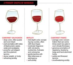 Tasting Corner: Simplifying Red Bordeaux Today, A Modernized Overview