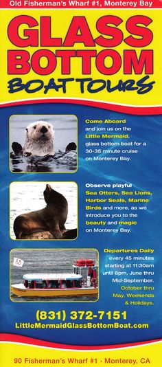 Harbor Seal, Old Fisherman, Glass Bottom Boat, Sea Otter, Monterey Bay, Boat Tours, Brochures, Otters, The Little Mermaid
