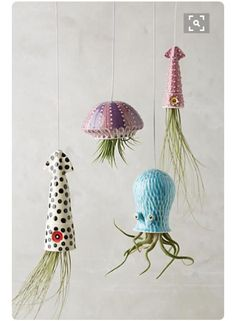 Luchtplantjes inktvissen