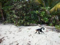 """""""Angsten loslaten"""" - ook al word je aangevallen door een aap in Costa Rica ;-)"""