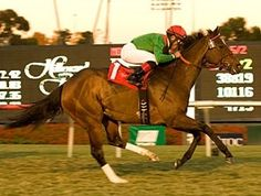 Gypsy's Warning(2005)(Filly) Mogok- Gypsy Queen By Royal Chalice. 4(C)x 5(C) To Natalma, 5x5 To Bold Ruler & Native Dancer, 5(C)x5(C) To Almahmoud. 21 Starts 7 Wins 8 Thirds. $518,912. Won Matriarch S(G1T), South African Fillies Classic(SAF-1), Thekwini S(SAF-1), Acacia H(SAF-3), Eatontown H(G3T), Graduation Plate(SAF), 3rd Yellow Ribbon S(G1T), Beverly D S(G1T), Durban Golden Slipper(SAF-1), L Jaffee Empress Club S(SAF-1), Ipi Tombe Challenge(SAF-2), Woolavington S(SAF-1), Strelitzia…