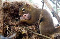 <3 mama squirrel adopts baby <3 a story of compassion <3