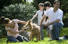 Bacteria from Dogs May Be Beneficial to Human Health - Top Dog Tips