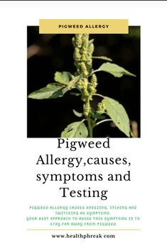Pigweed allergy is the immunological responses elicited by protein allergen contained in pigweed when ingested. Pigweed allergy, like other allergies, occurs because the body recognizes the presence Wellness Tips, Health And Wellness, Health Fitness, Healthy Living Tips, Healthy Tips, Allergy Symptoms, Spiritual Health, Body Systems, Live Long