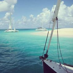 A must-do in USVI: Taking a trip out to Buck Island while visiting. Charters are provided at Tamarind Reef Resort's marina