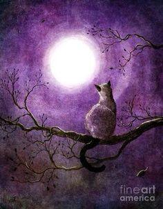 Chat de la lune ..