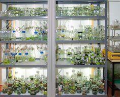 types of plant tissue culture media pdf