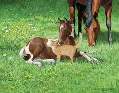 A925290497: Hi There-Foal & Cat Painting by P. Weirs