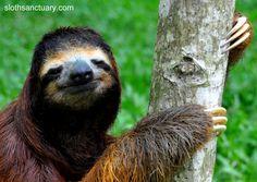 Sloth (Sloth Sanctuary)