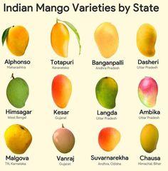 Mango Jelly, Mango Fruit, Mango Tree, Mango Varieties, Fruits Photos, Fruits Images, Natural Curiosities, Hacks, Fruit Garden