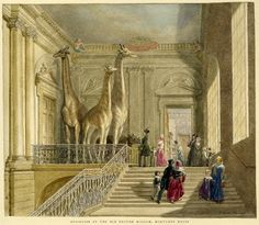 Regency History -- The History of the British Museum. (Image is Staircase of the British Museum in Montagu House    Watercolour by George Scharf I (1845)    © Trustees of the British Museum)