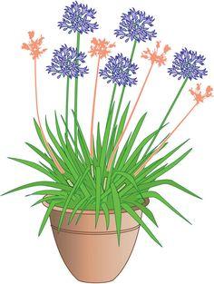 Agapanthus: care and overwintering - Garten - Awesome Garden Ideas Herb Garden Pallet, Diy Herb Garden, Pallets Garden, Garden Planters, Fall Planters, Container Gardening Vegetables, Planting Vegetables, Vegetable Gardening, Garden Care