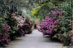 Magnolia Plantation path 2