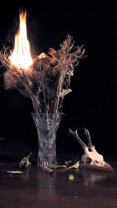 cinemagraph animated gif of dried bouquet fire and deer skull