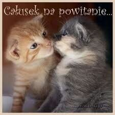 Baby Girl Sweaters, Animals And Pets, Images, Life, Quotes, Amigos, Bonjour, Good Morning, Night