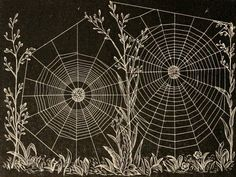 American spiders and their spinningwork  Illustrations from 'American spiders and their spinningwork. A natural history of the orbweaving spiders of the United States, with special regard to their industry and habits' by Henry C. McCook. Published 1889