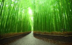 Bamboo Forest Wallpaper [3840  2400]