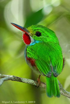 Red accents the iridescent green on this little bird.