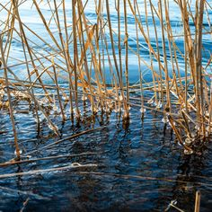 End of the winter, ice forms around the river's vegetation by Petras Paulauskas Display Advertising, Print Advertising, Marketing And Advertising, Retail Merchandising, Us Images, Print Pictures, Winter White, Abstract Backgrounds, Wall Art Prints
