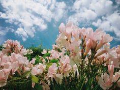 flowery, sky, flowers, pink