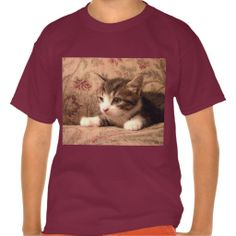 Cardinal Kitten Kids Shirt!  #Cute #Kitten #Zazzle #Store #customizable #gifts http://www.zazzle.com/conquestkitty*