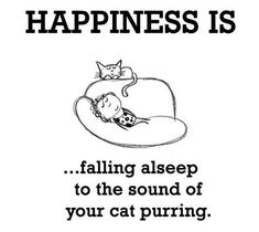My life of saving cats and dogs while always looking for ways to save cash Cute Cats And Kittens, I Love Cats, Pretty Cats, Beautiful Cats, Crazy Cat Lady, Crazy Cats, Cat Comics, Cat Behavior, Cat Quotes