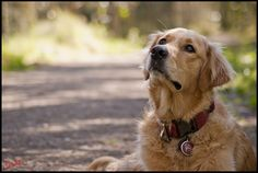 @ Anna G.    -- check out the whole board of goldens...