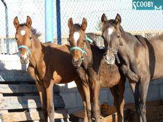 Scooby, Sociedad Protectora de Animales en Medina del Campo, Castilla y León