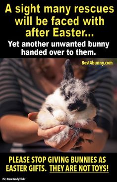 "This happens every year. Please don't give your child a bunny when you aren't fully committed to caring for it for the duration of its entire life. Bunnies are wonderful pets, but they should never be Easter presents (unless you know what you're getting into and you pick Easter as the adoption/""bring bunny home"" day to be ironic).(this person is very right!)"