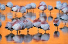 Life in Color: Orange, Orange Pictures -- National Geographic