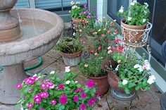 flowers in pots on patio with a birdbath=perfect!