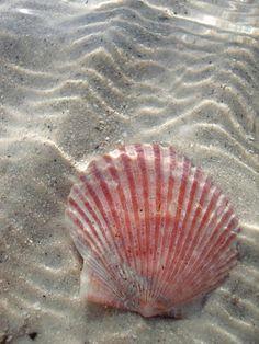 I Love The Beach, Beach Quotes, Ocean Beach, Beach Walk, Ocean Life, Coastal Living, Sea Creatures, Under The Sea, Starfish
