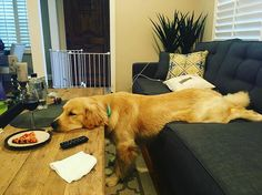 TGIF! It's been a long week, wouldn't you agree?