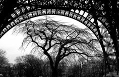 Tree under arch of Eiffel Tower by Mr. Physics