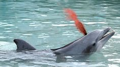 SeaWorld Crowd Applauds For Dolphin Playfully Spraying Blood From Blowhole