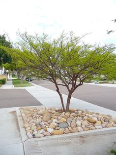 Garden Design Ideas Modern Trees 25 Ideas For 2019 Low Water Landscaping, Yard Landscaping, Landscape Architecture, Landscape Design, Garden Design, Garden Wedding Games, Wedding Ideas, Drought Tolerant Trees, Mesquite Tree