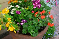 The Edible Flower Container Garden....includes a list of flowers from the National Sustainable Agriculture Service