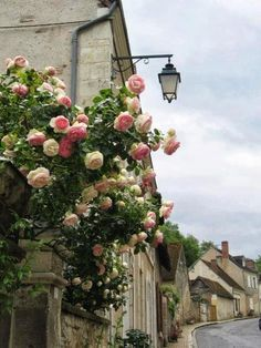 Inspiration - Pierre de Ronsard roses in An English Village. Murs Roses, Beautiful Flowers, Beautiful Places, Exotic Flowers, Purple Flowers, Ronsard Rose, English Village, Climbing Roses, Rose Cottage