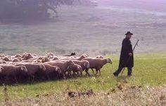 Résultats de recherche d'images pour « acheter une houlette de berger »