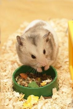 List of safe hamster foods